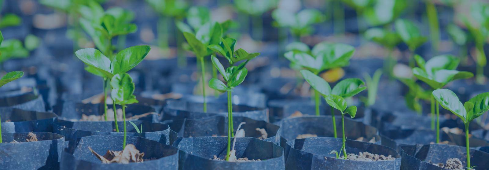 Landing page banner image seedlings 1